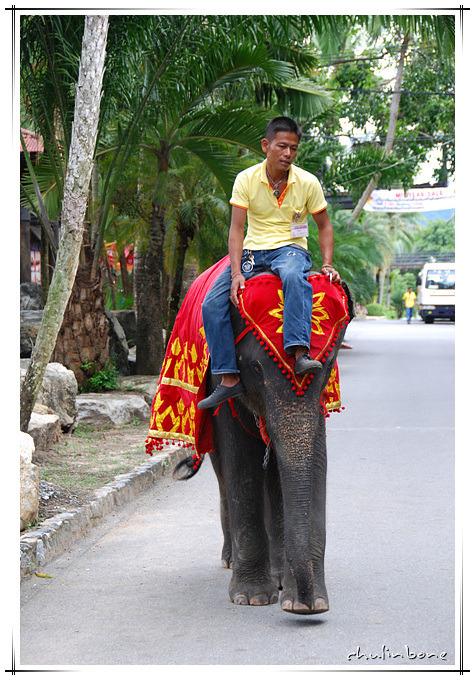 """태국 파타야 """"농룩빌리지""""-전통춤.코끼리쇼.식물원"""