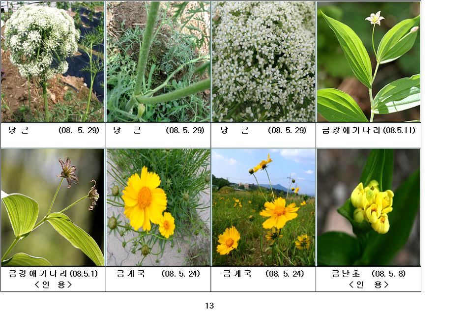 봄에 피는 야생화(5월-4)