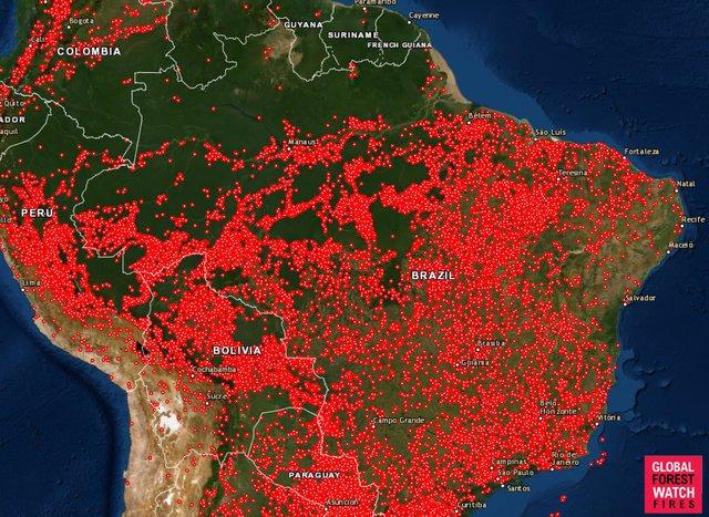 농사잡록 10 -지구의 허파, 아마존이 불타오르고 있다